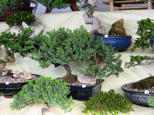 And I had just been thinkin' to myself...where have all the tiny trees gone?  Where does one go to buy bonsai?!  It's not like they have a big box in the 'burbs for that.